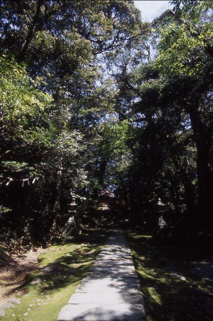 須須神社社叢