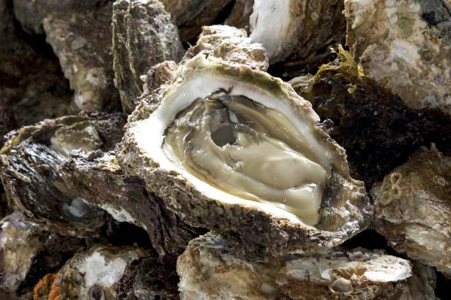 Natural rock oyster