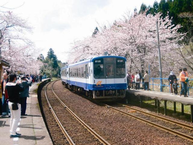【2021年中止】花見だよ!in能登さくら駅