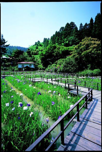 大安禅寺庭園