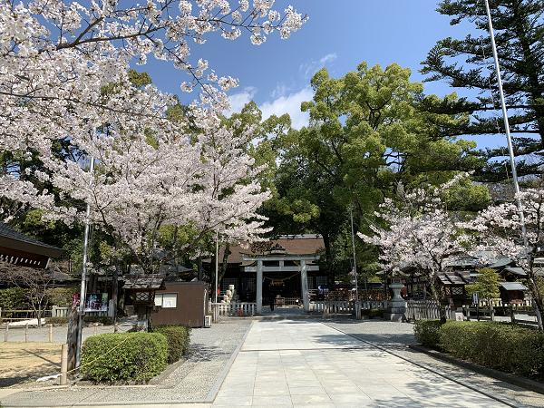武田神社の桜