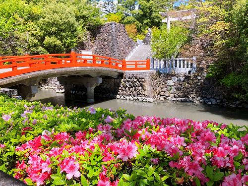 武田神社のミツバツツジ