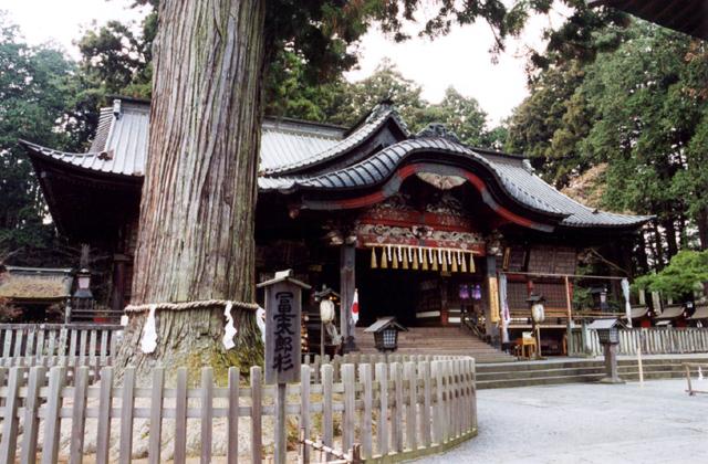 富士浅間神社の大杉