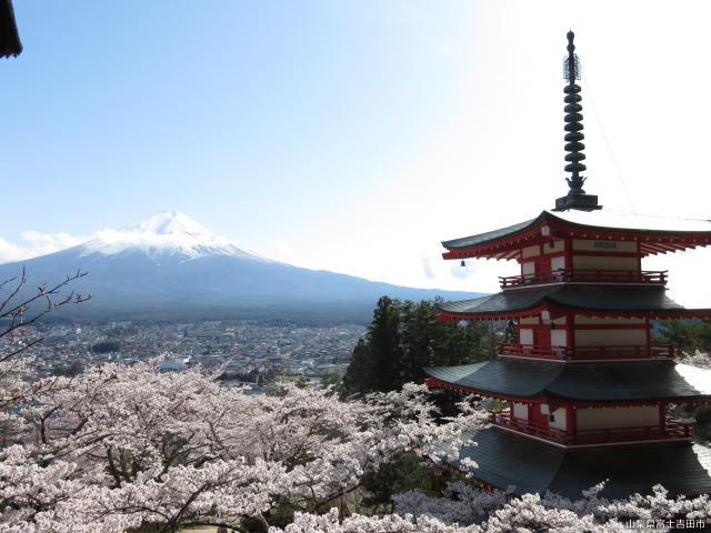 【2020年中止】新倉山浅間公園桜まつり