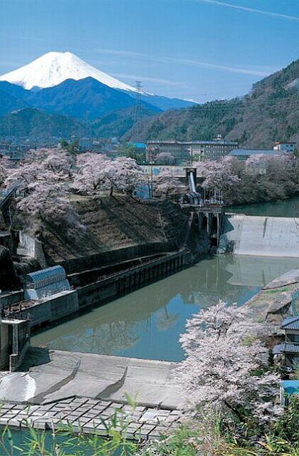 川茂発電所の桜