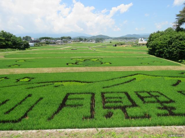 【中止】稲絵アートフェスティバル