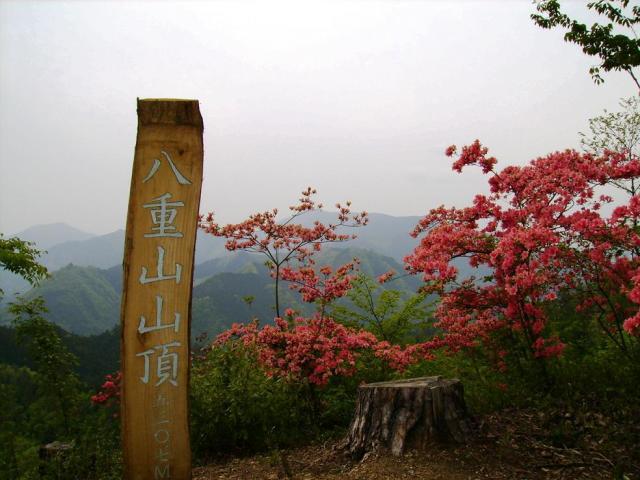 八重山五感の森遊歩道