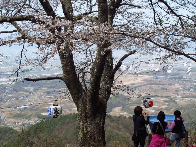 千本桜登山道頂上付近