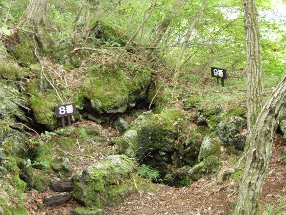 鳴澤的熔岩樹型