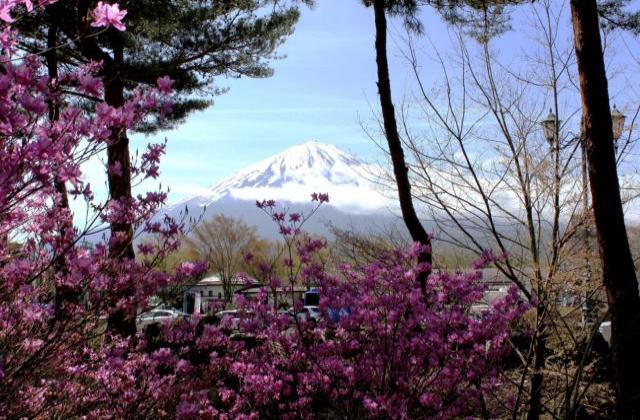 narusawa杜鵑花節