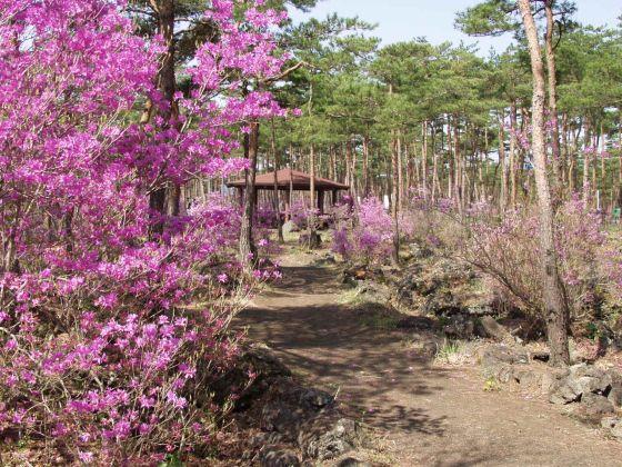 なるさわ富士山博物館自然探索路