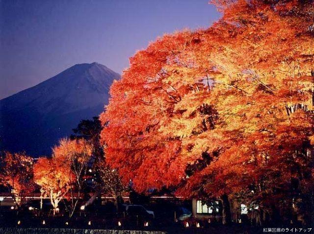 富士河口湖紅葉節