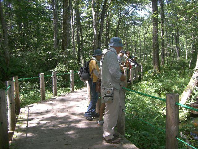 戸隠森林植物園自然観察会