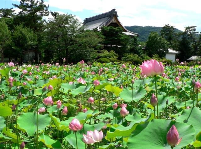 【開催中止】蓮のフェスタ in 信濃国分寺