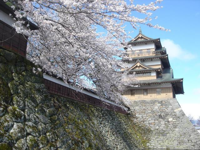 高島公園の桜