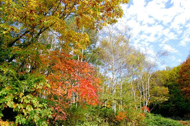 峰の原高原の紅葉