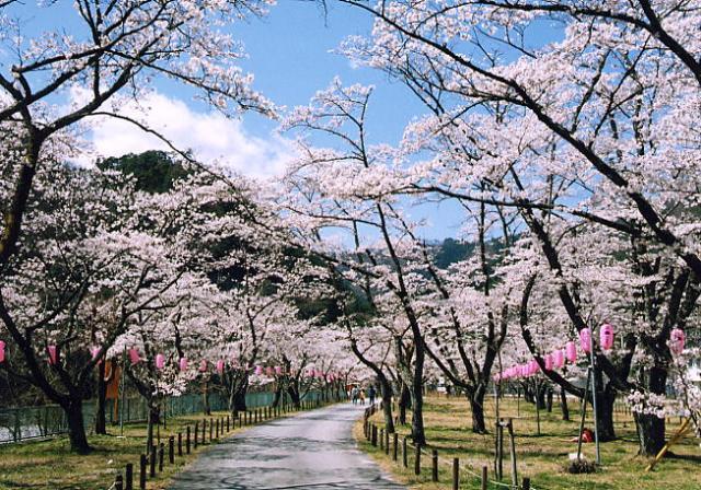 中部電力の桜公園
