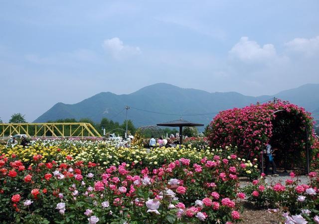 【中止】さかき千曲川ばら公園 ばら祭り