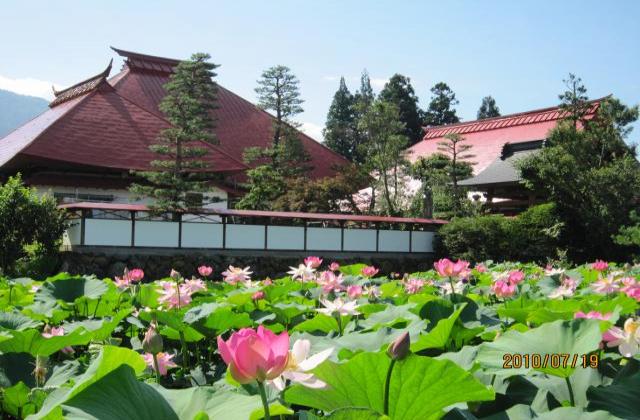 【2020年中止】稲泉寺ハス花祭り