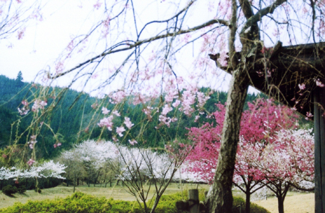 庭田山頂公園