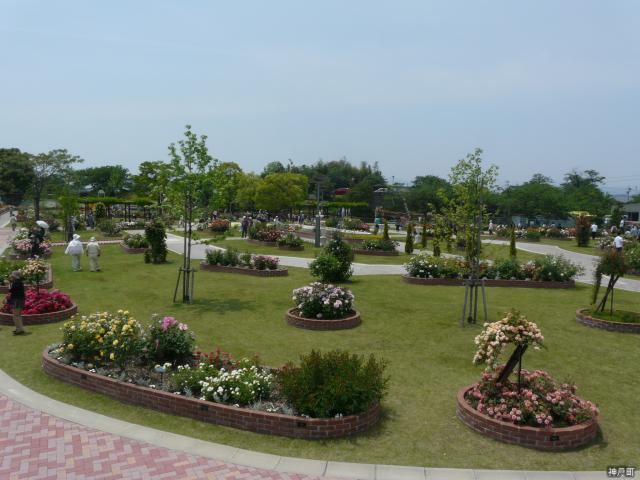 玫瑰花公園休息的廣場