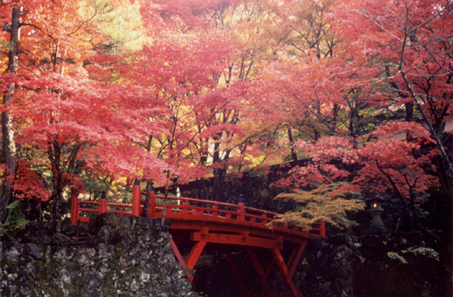 旁邊倉庫寺的紅葉