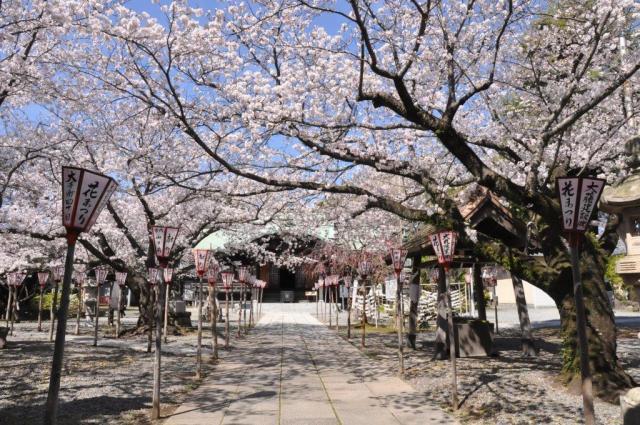 日枝神社花まつり