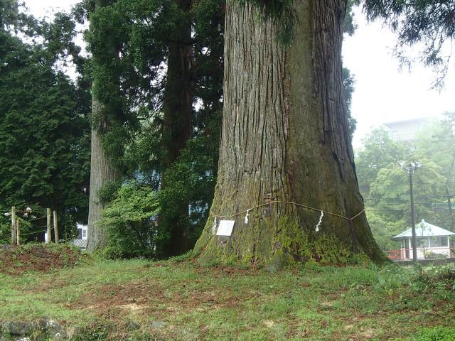 村山浅間神社の大スギ