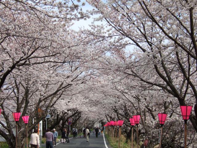 金比羅山・瀬戸川桜まつり
