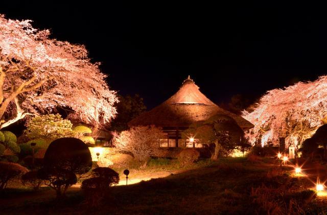 【中止】御殿場桜まつり