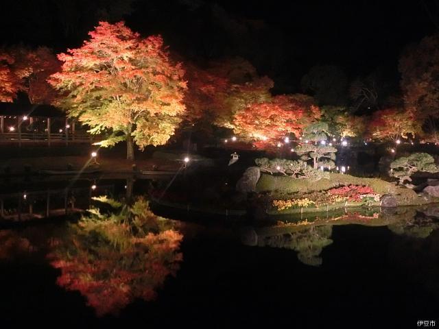 修善寺虹の郷 紅葉ライトアップ