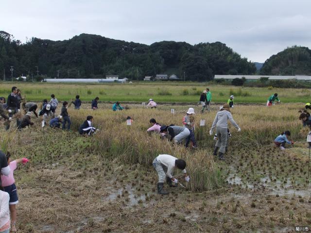 田んぼアート菊川 収穫祭