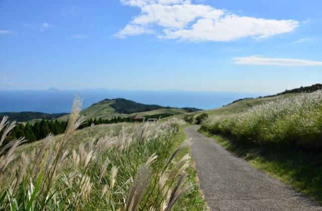Japanese pampas grass event of Inatori Hosono Heights autumn