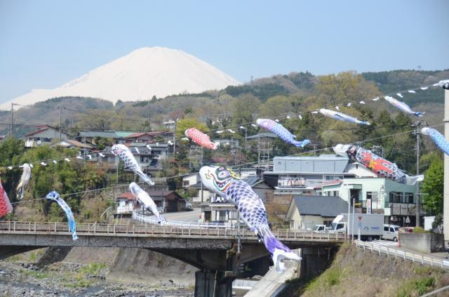 富士山金太郎春天節日內容豐富的上升揭示