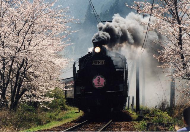 kawane櫻花節
