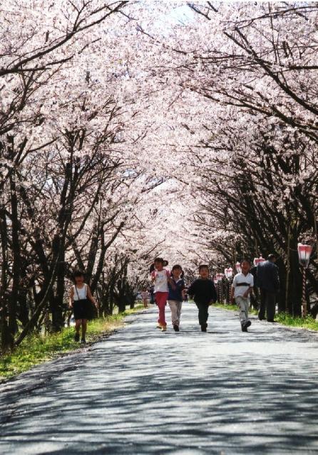 向天方櫻花節