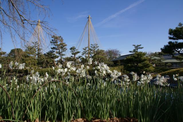 白鳥庭園のお正月