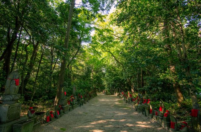 蓮華寺寺叢自然環境保全地域