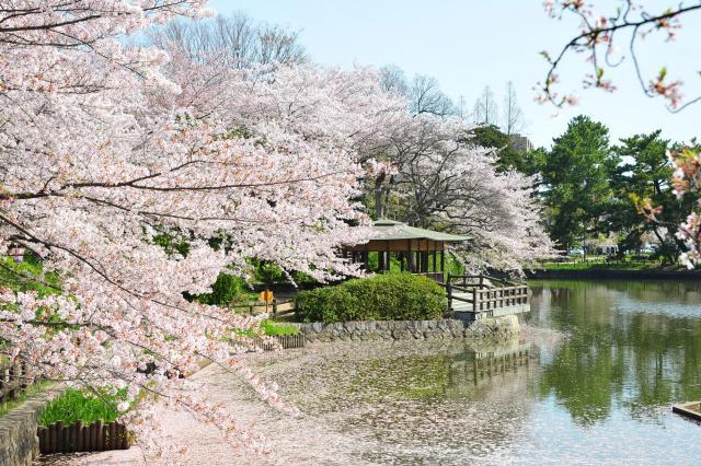 刈谷桜まつり