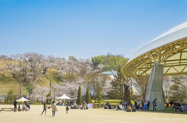 鞍ケ池公園の桜