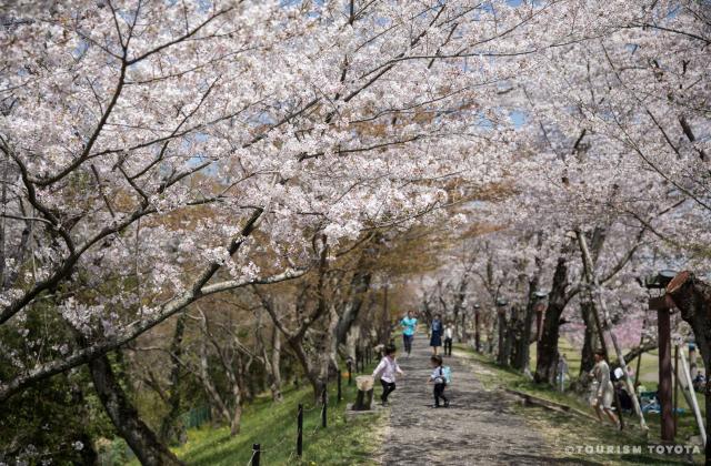 水源公園の桜並木