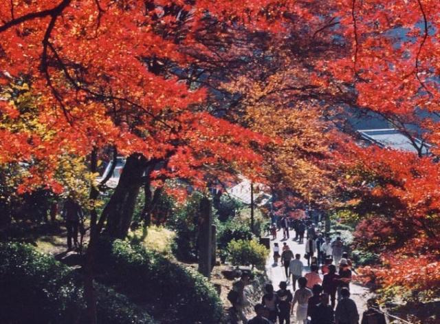 【2020年中止】鳳来寺山もみじまつり