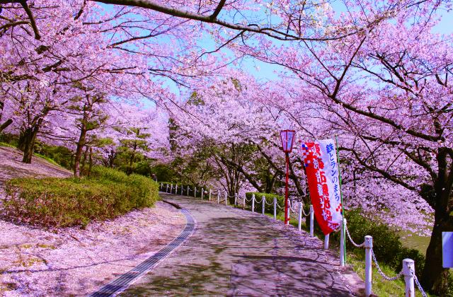 大池公園桜まつり 夜桜ライトアップ