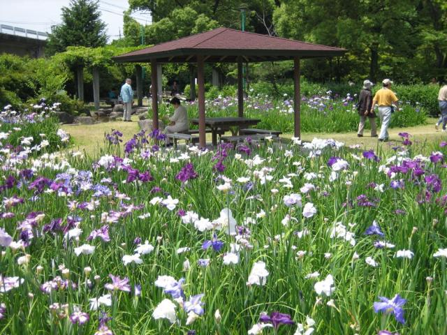 Chiryu Park Iris Festival