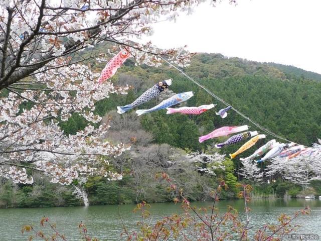 【2021年中止】滝頭桜まつり
