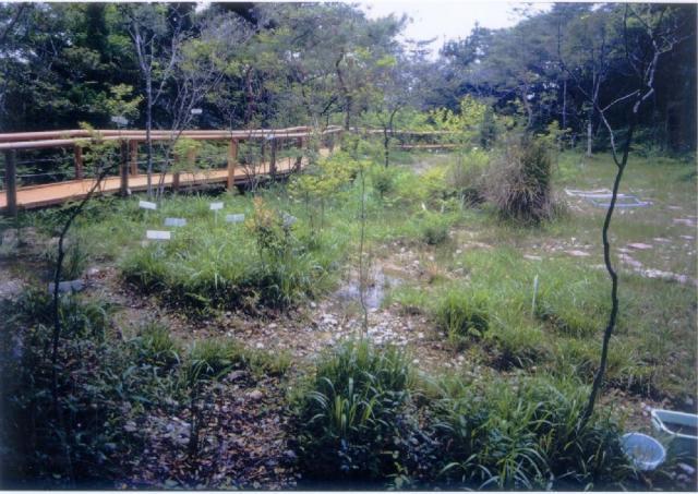 壹町田濕地植物群落