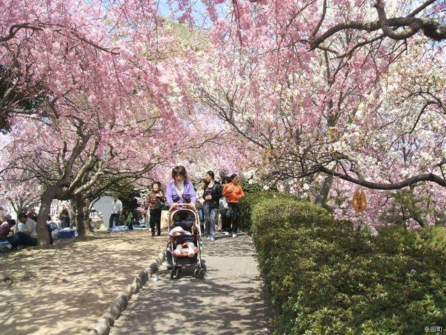 【2021年中止】幸田しだれ桜まつり