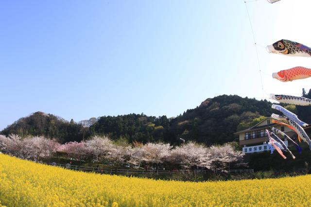 榊原温泉さくら祭り