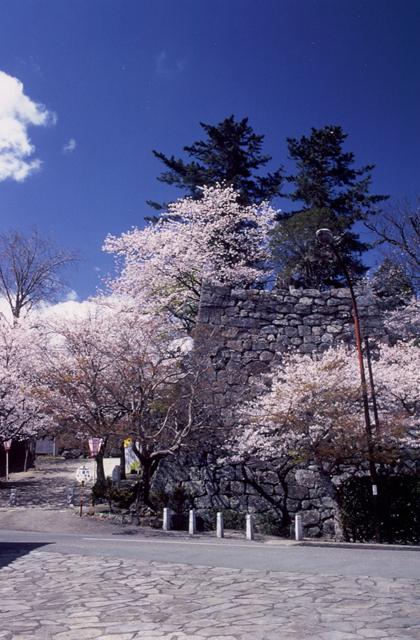 松坂城跡(松阪公園)の桜