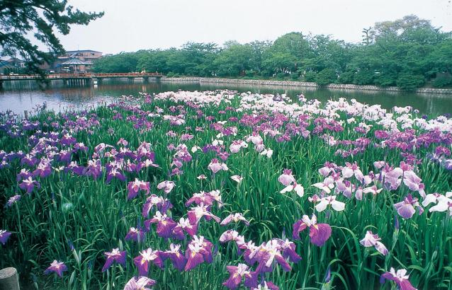 Kyuka Park★S0101